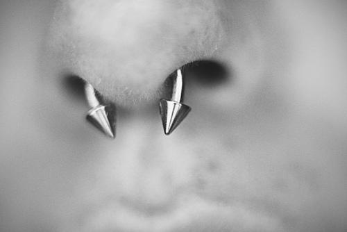 Septum Piercing Unicorn Stabs